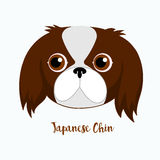 Vector dog Japanese chin. Icon flat design.Dog characters. Cartoon vector illustration handmade. Head dog. Icon with dog  on white background Royalty Free Stock Image