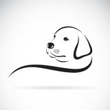 Vector of a dog labrador head. Vector of a dog labrador head on a white background Stock Photos
