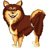 Vector Dog  lapphund breed smiles Royalty Free Stock Photography