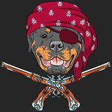 Vector Dog Rottweiler Pirate with pistols Stock Image