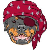 Vector Dog Rottweiler Pirate stock illustration