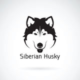 Vector of a dog siberian husky on white background. Royalty Free Stock Photography
