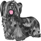 Vector dog Skye Terrier breed Royalty Free Stock Photos
