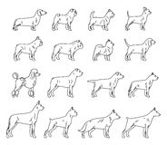 Vector dog thin line icons collection isolated on white. For dog club or shop, grooming, training, food or veterinary clinic Royalty Free Stock Image