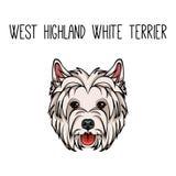 Vector dog West Highland White Terrier face icon flat design. Vector illustration. Vector dog West Highland White Terrier face icon flat design. Vector Stock Photos
