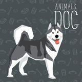 Vector Dogs Collection. Vector geometric dogs collection with seamless background. Alaskan Malamute Royalty Free Stock Image