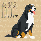 Vector Dogs Collection. Vector geometric dogs collection with seamless background. Bernese mountain dog Stock Photo