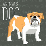 Vector Dogs Collection. Vector geometric dogs collection with seamless background. British Bulldog Royalty Free Stock Photography