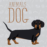 Vector Dogs Collection Stock Images