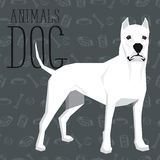 Vector Dogs Collection Royalty Free Stock Images