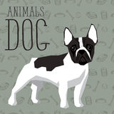 Vector Dogs Collection. Vector geometric dogs collection with seamless background. French Bulldog Royalty Free Stock Photography