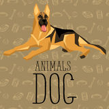Vector Dogs Collection Royalty Free Stock Photos