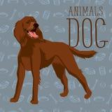 Vector Dogs Collection Stock Photos