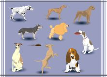Vector dogs Royalty Free Stock Photo