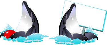 Vector with dolphins. Vector, dolphins in the waves with the ball and plate Stock Images