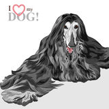 Vector domestic dog black Afghan Hound breed Stock Photos