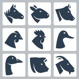 Vector domesticated animals icons set. Horse and sheep, cow, chicken, rooster, duck, goose, pig and goat vector illustration