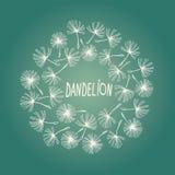 Vector doodle dandelion Vintage frame. Stock Image