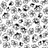Vector doodles seamless pattern of spring flowers. Black contours of flowers from fruit trees on white background. Black and white boundless background Royalty Free Stock Photo