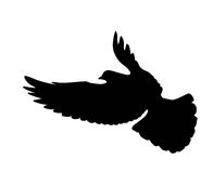 Vector dove Stock Images