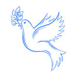 Vector Dove. Hand drawn Dove of Peace illustration, dove with ol Royalty Free Stock Image