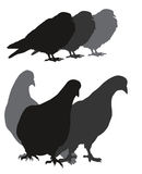 Vector dove silhouettes Stock Images