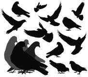 Vector doves Stock Image