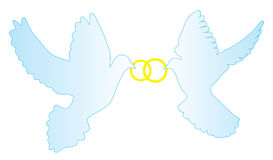 Vector doves with wedding rings Royalty Free Stock Images