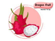 Vector Dragon fruit isolated on color background,illustrator 10 eps Royalty Free Stock Photography