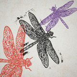 Vector dragonfly in abstract composition. Stock Photo