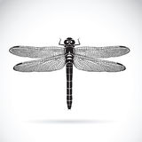 Vector of dragonfly on white background. Insect. Royalty Free Stock Photo