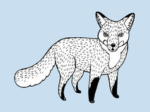 Vector draw fox. This is Vector illustration. It's fox royalty free illustration