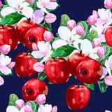 Vector drawing of apple blossoms Stock Image