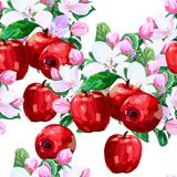 Vector drawing of apple blossoms Royalty Free Stock Photo