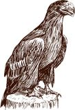 Eagle chick. Vector drawing of a baby bird of an eagle Stock Image
