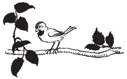 Vector drawing of bird perched on tree branch Stock Photo