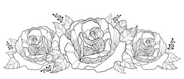 Vector drawing with bouquet of outline rose flower isolated on white background. Floral elements with roses and leaves in contour Stock Photos