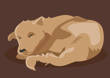 Brown dog sleeping Royalty Free Stock Photo