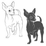 Vector drawing of a chihuahua. EPS10 Royalty Free Stock Image