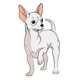 Vector drawing of a chihuahua. EPS10. Vector drawing of a chihuahua. Isolated objects on a white background Stock Image
