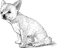 Sketch of a funny sitting lap dog. Vector drawing of a cute small dog stock illustration
