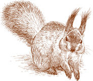 Fluffy squirrel. Vector drawing of a cute squirrel royalty free illustration
