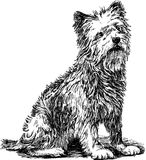 Terrier Royalty Free Stock Photo