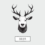 Vector Drawing Deer Head. This is vector drawing about animal head stock illustration