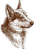 A portrait of a corgi dog vector illustration