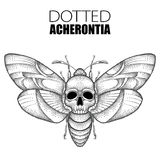 Vector drawing of dotted black Death`s head hawk moth or Acherontia atropos isolated on white background. Royalty Free Stock Photo