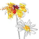 Vector drawing flowers of daisy. Vector drawing daisy flowers, floral background, hand drawn botanical illustration stock illustration