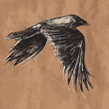 Vector drawing of flying african crow on craft Royalty Free Stock Images