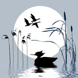 Vector drawing flying birds. On background sun Royalty Free Illustration