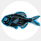 Vector drawing of freshwater fish with fins, underwater life ill Royalty Free Stock Image